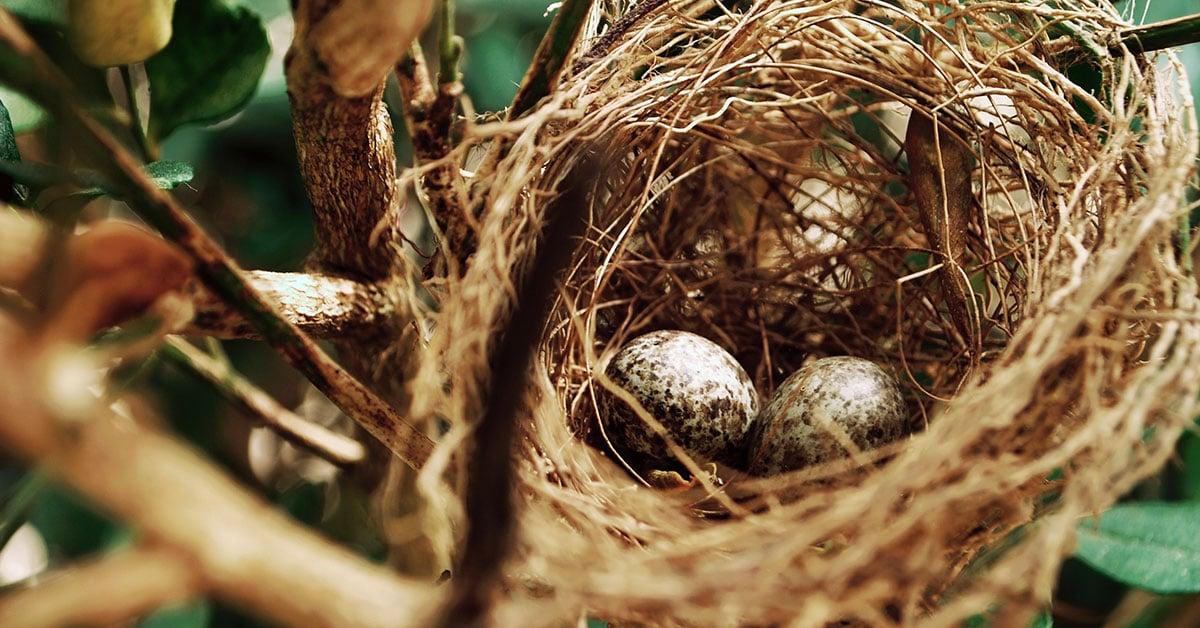 Come capire se le uova sono commestibili - Portale Sopravvivenza