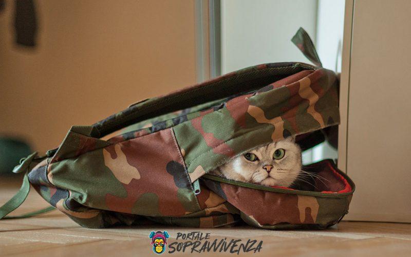Cat prepping - Preparare gatto emergenze