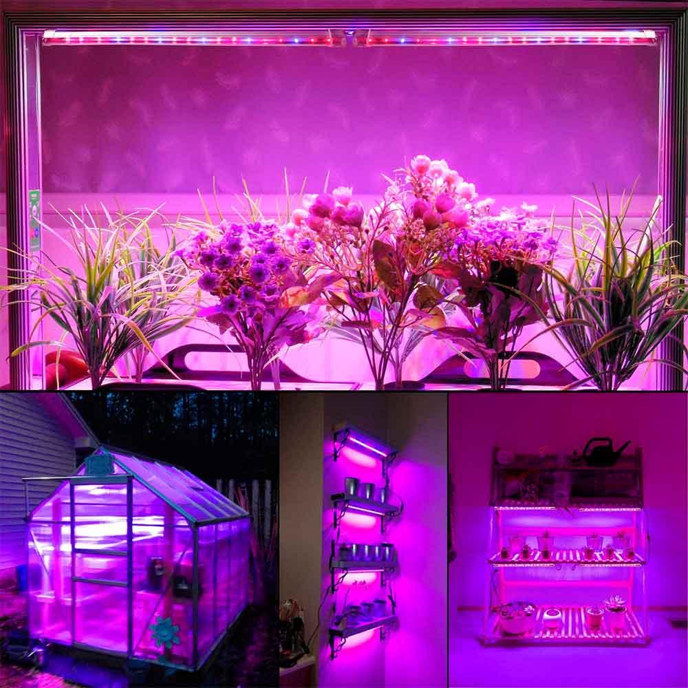 Esempio di coltivazione indoro con i LED